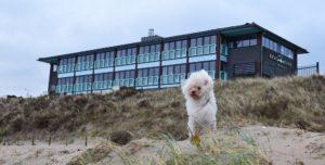Beachhouse Hotel verwelkomt honden